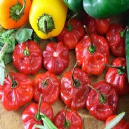 Hot Pepper Scotch bonnet Red - 5 grams - Bulk Discounts Available